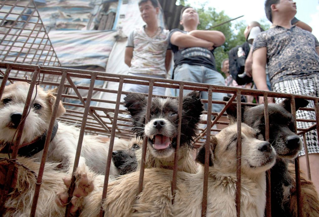 The Yulin Festival of China – Hell On Earth – DWC HOME